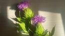 Paper thistle flowers from crepe paper DIY step by step tutorial paper flower making