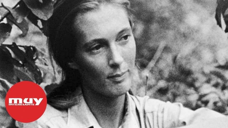 Curiosidades sobre Jane Goodall