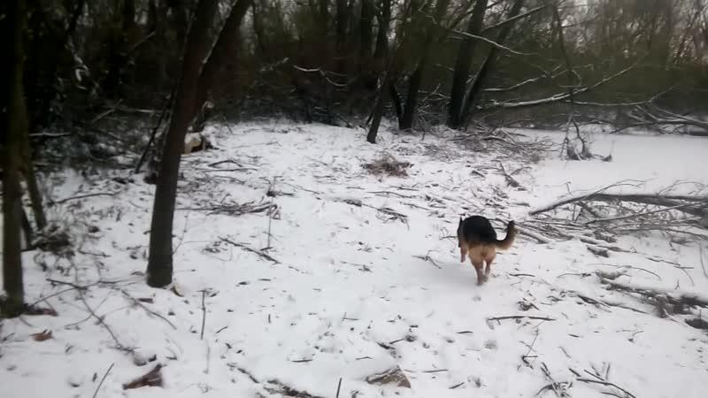 На реке, Зима 2018
