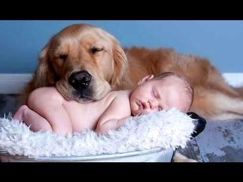 Najlepsze śmieszne koty i psy kochają dzieci. Kompilacja | Nowy