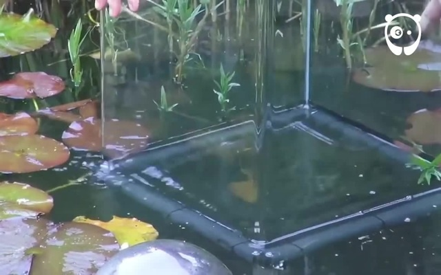 Have you ever seen an inverted aquarium