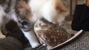 Cat licking owl (delicious)