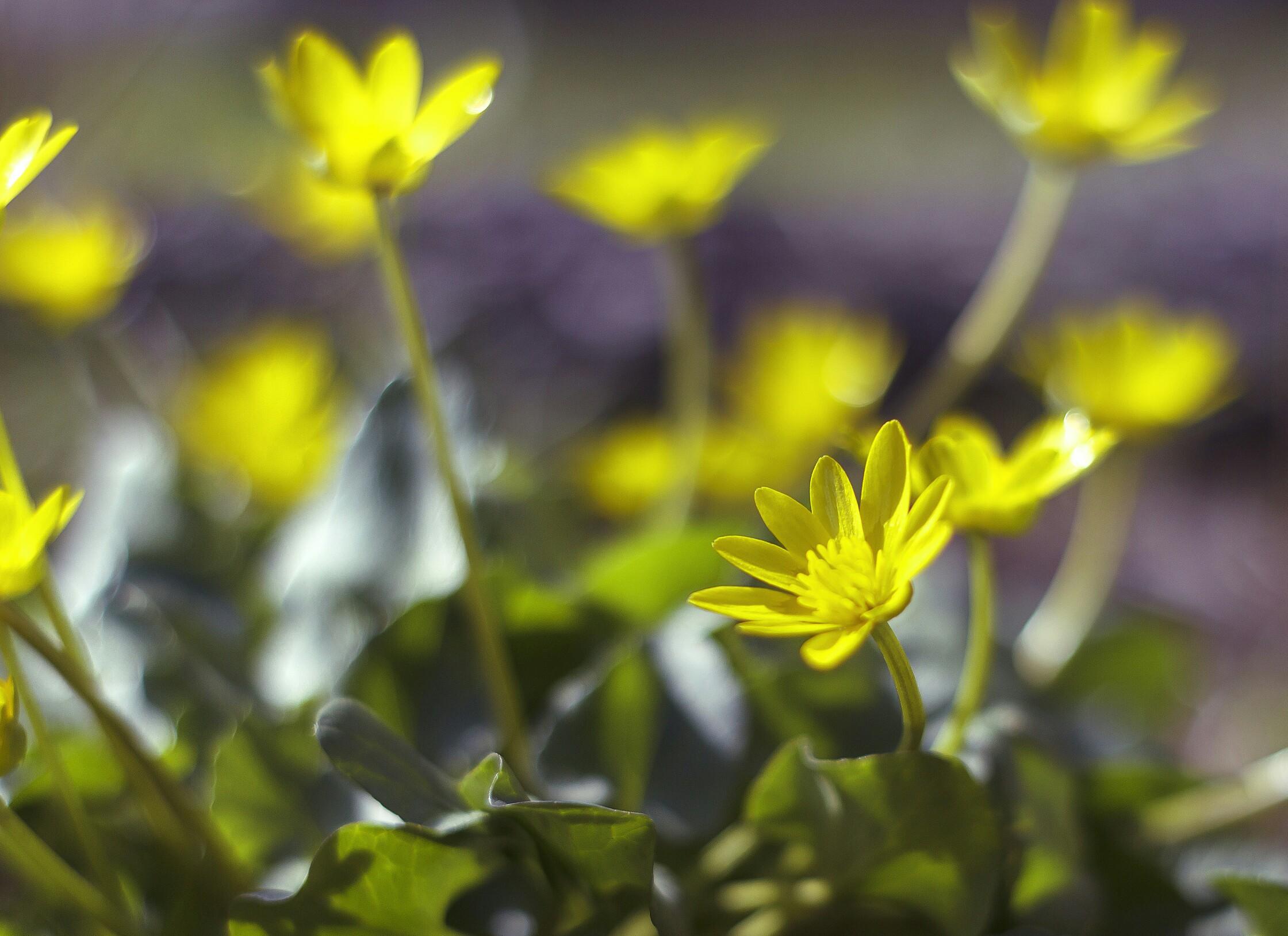 Весна пришла, весне дорогу!