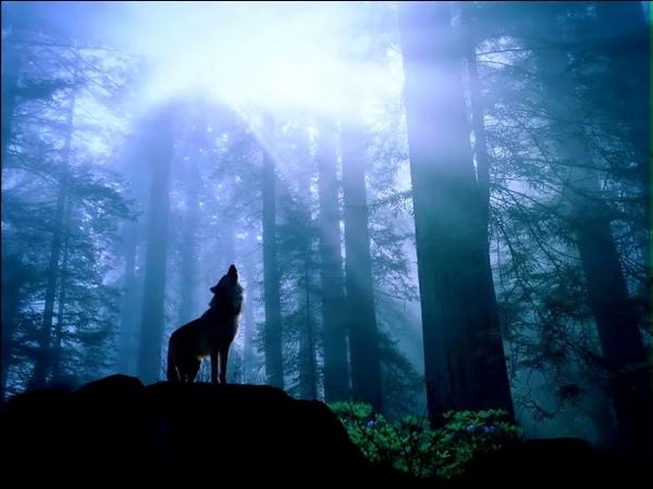 Страшные звуки в лесу музыка ночной лес вой волка ужас полнолуние опасность ночёвка в лесу