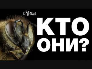 ПЧЁЛЫ - ЧТО МЫ О НИХ ЗНАЕМ? /топ удивительных фактов/ КРАМОЛА