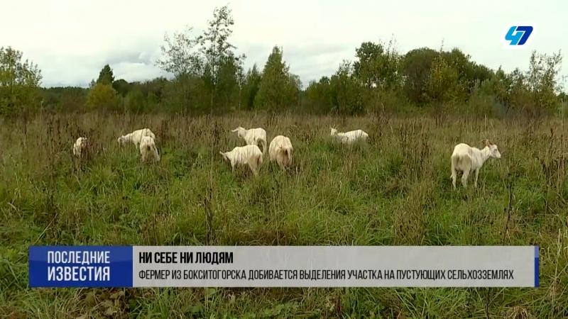 Фермер из Бокситогорска добивается выделения участка на пустующих сельхозземлях
