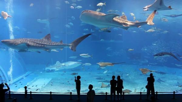 Гигантский аквариум в Японии