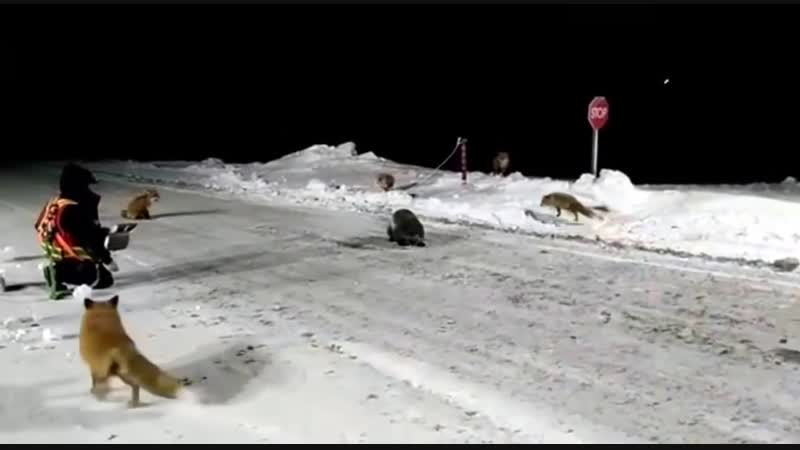 Голодные жители Якутии