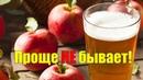 Домашнее вино из яблок СИДР СВОИМИ РУКАМИ