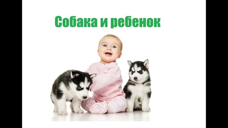 Собака и ребенок. Совместная жизнь