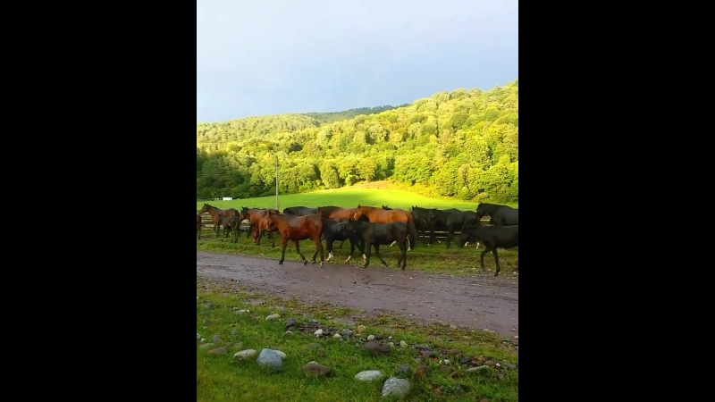 Солнечная Далина, ущелье Аскаут. Табун лошадей