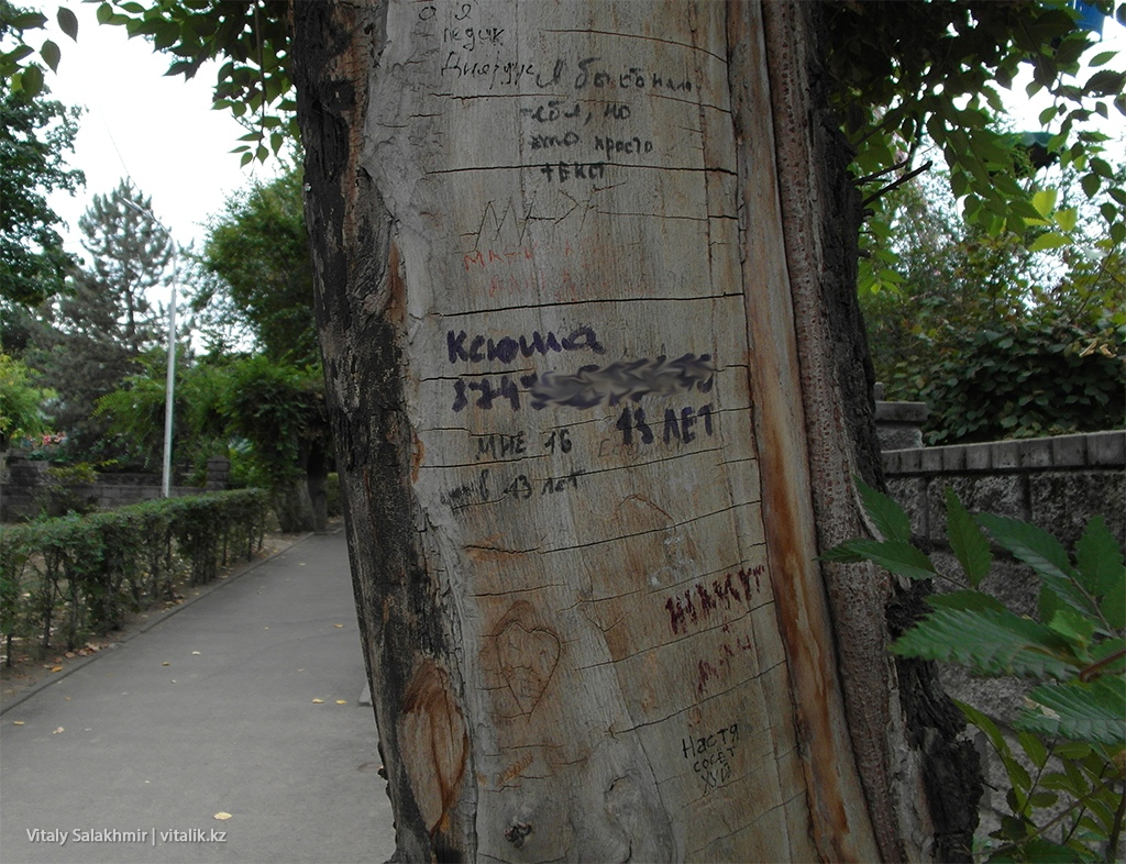Деревья в Фемили парке Алматы 2018