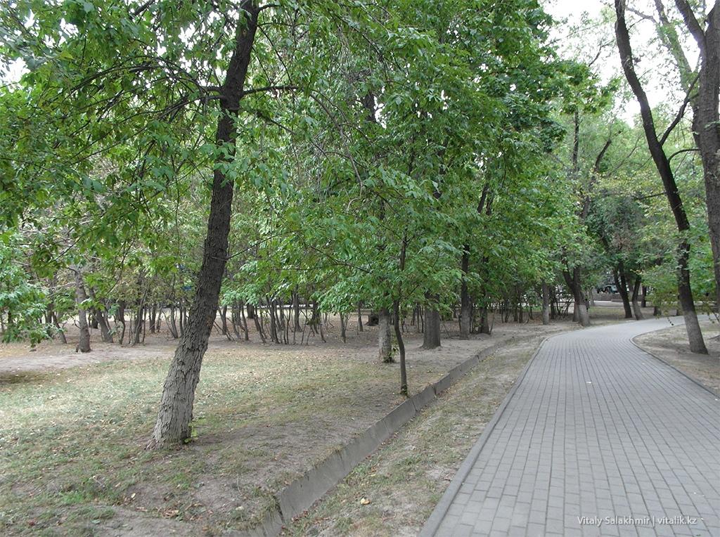 Деревья Фемили парка Алматы 2018