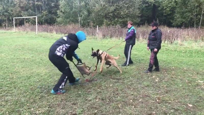 Амиго 6 месяцев и Яни тренинг