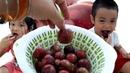 Gia Linh và em Cò ăn mận chấm muối ớt hoa trái đầu mùa hè