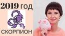 СКОРПИОН гороскоп на 2019 год