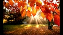 Лала Айлэнд Ах эта осень