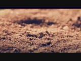 v-s.mobiЭльбрус Джанмирзоев feat Фаган Сафаров - Сарай-Караван. Хит-2017. (1).mp4