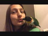 Гриша целуется, это не попугай, а нежное чудо)