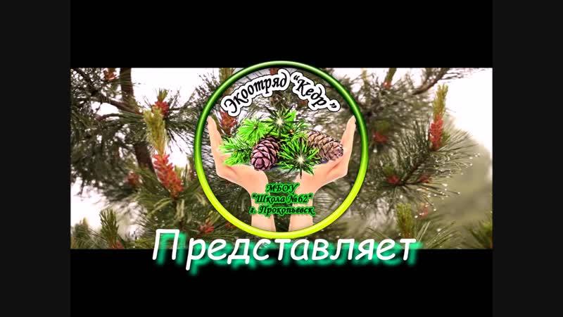 Лес-это лёгкие планеты.Берегите лес!