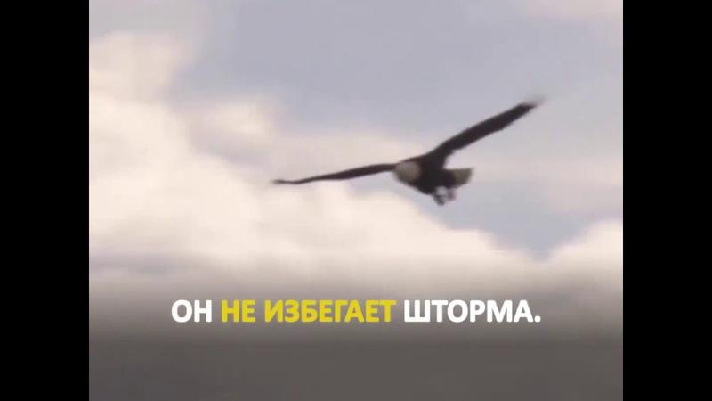 Орёл не избегает бушующий шторм Орёл поднимается выше и побеждает бурю