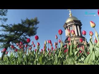 Как Петербург украсили к 9 мая