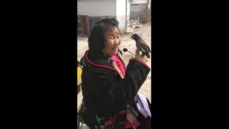 Простая китаянка исполняет мелодии из пекинской оперы и как на это реагирует птица