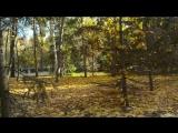 Золотая осень в парке Горького (г. Казань)