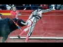 Matador Enrique Ponce is seriously injured when a bull gores him in the backside