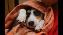 Защитите животных и их владельцев! Они не преступники!