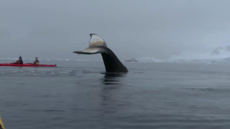 Каякеры и кит