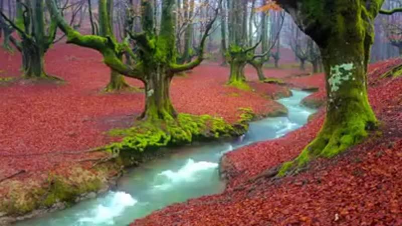 فيديو، __Otzarreta Forest by Felix Urrutia Photography,__، المدة _٤٥_ من الثواني