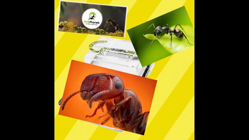 Распаковка муравьиной фермы с сайта AntPlanet.ru