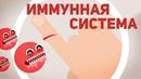Инфекция Иммунной Системы Инфекция Бактериями Kurzgesagt на русском