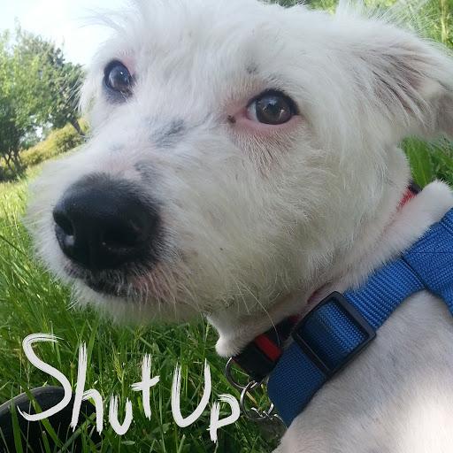 Onision альбом Shut Up
