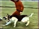Дрессировка собак. Питомник Красная звезда Часть-1