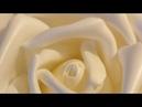 Бесплатный Вебинар Всё о розах из изолона,Вебинар Крылья.