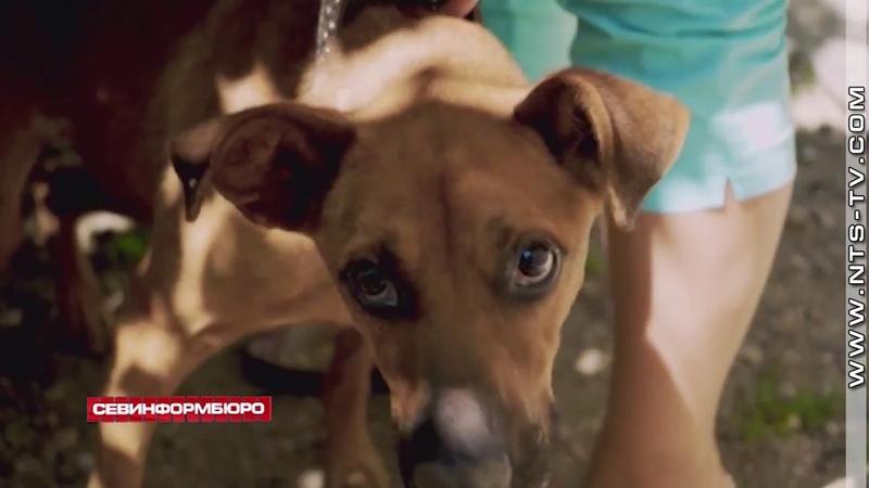 10 09 2018 Ветеринар Аксёнов отчитался за утилизацию трупов павших собак фотографиями из интернета