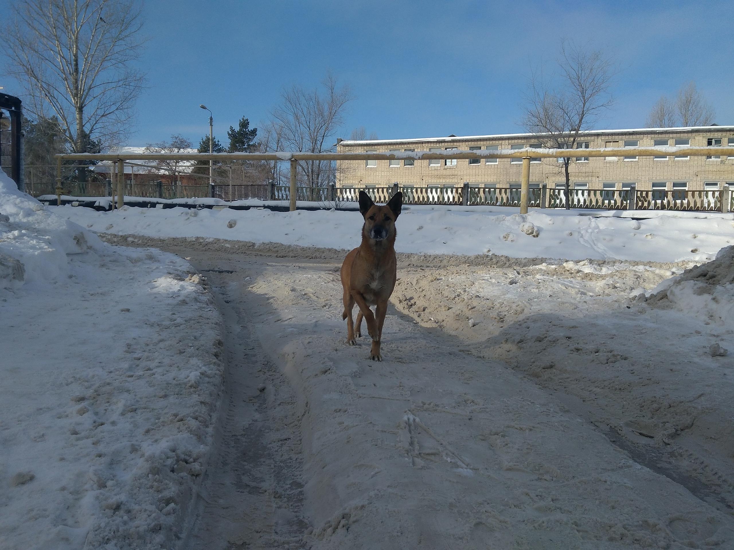 Бездомные собаки в Сызрани