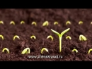 11 Нельзя при выращивании помидоров ВАЖНО
