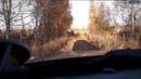 Осенняя прогулка. Осенний фотосет. Lifan X60. Для Drive2