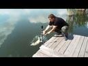 Новая рыбалка отпустили карпика 8 5 кг