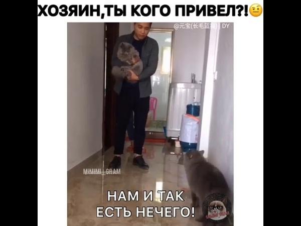 Злой кот спрашивает кого привел хозяин в дом!