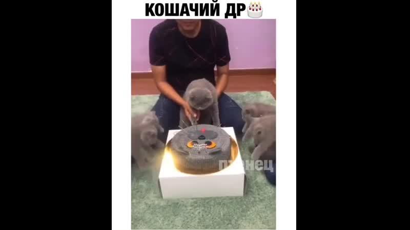 Как котики празднуют день рожденья