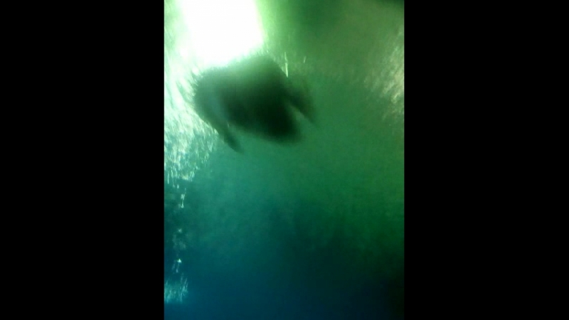 Тоннель в океанариуме СПб