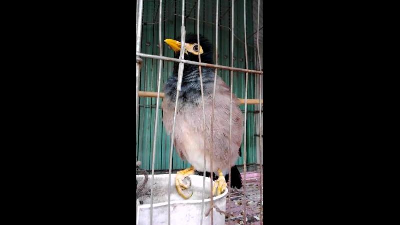Отзывчивая птичка