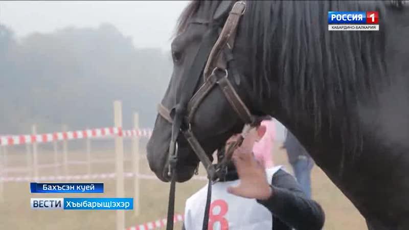 Баксан/ежегодные дистанционные конные пробеги на лошадях кабардинской породы... октябрь 2018 года ...
