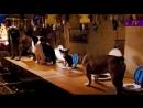 Отель для собак mp4