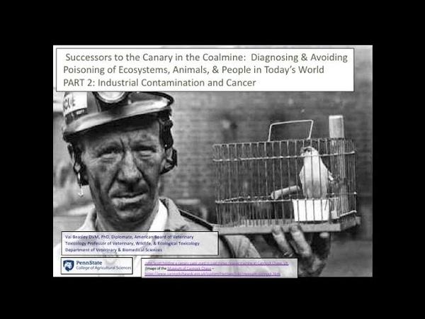 Диагностика и предотвращение отравлений экосистем животных и людей Часть 2 Промышленные загрязнители Diagnosing and Avoiding Poisoning of Ecosystems Animals People Part 2 Industrial Contaminants