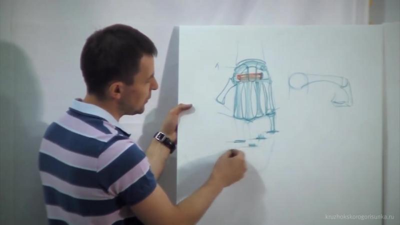 Анатомия конечностей. Александр Рыжкин